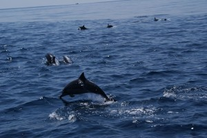 Whale-Dolphin-Watching-Mirissa08