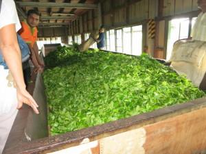 Sri-Lanka-Teefabrik_004